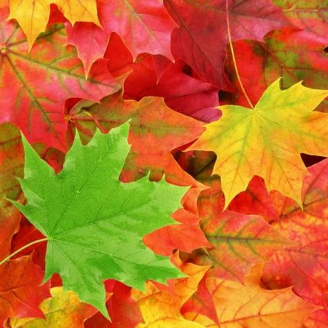 How much do you love Fall?