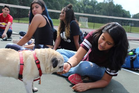 Health students play with dogs to learn about therapy animals