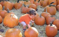 Picking pumpkins, Fields of Screams and other fun fall ideas