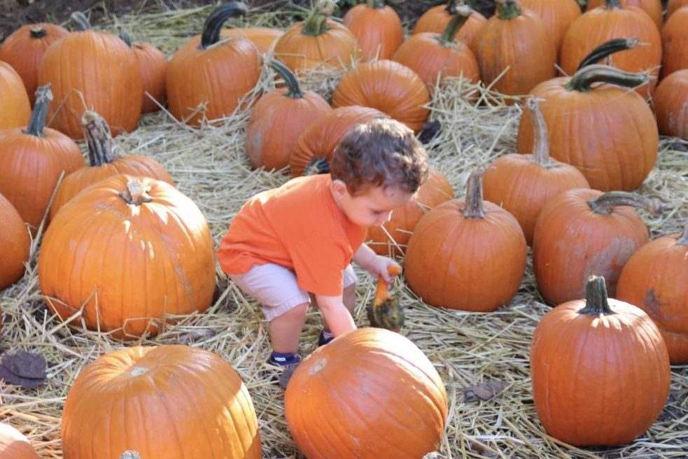 This little cutie is picking pumpkins at Butlers Orchard.
