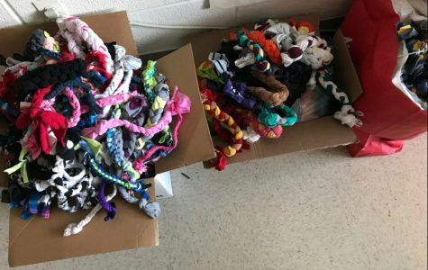 Key Club makes dog toys to donate to shelters over Thanksgiving