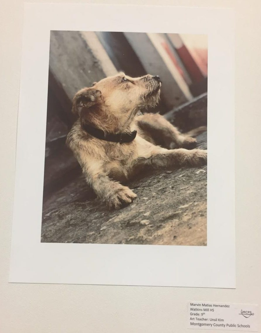 Photo by Freshman Marvin Hernandez of a dog in the Watkins Mill High School Art Show 2019